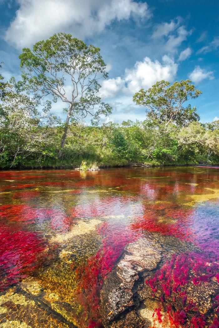 Caño Cristales – Colombia