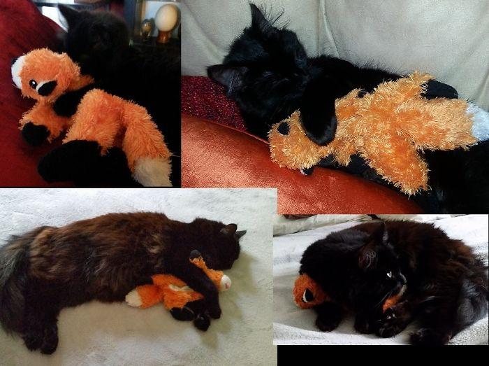 Clara & Foxy-fox 2m - 2yrs