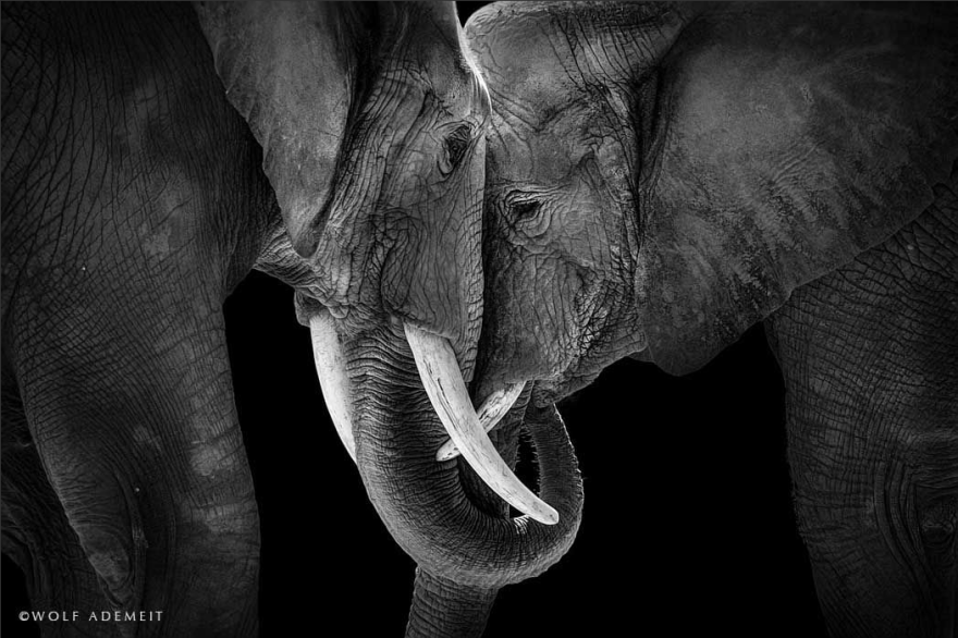Elephant Love: Photographer Shows The Emotional Side Of ... - photo#14