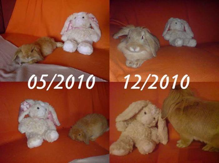 Zachary And His Plushy Rabbit
