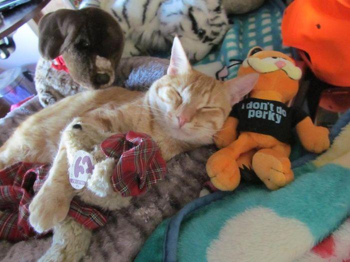 My Garfield's Favorite Toy!
