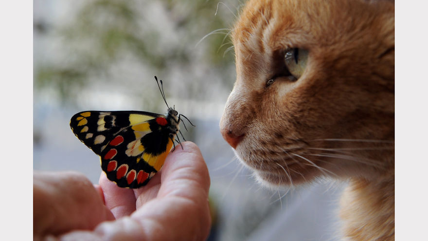 George With A Red Spotted Jezebel Butterfly