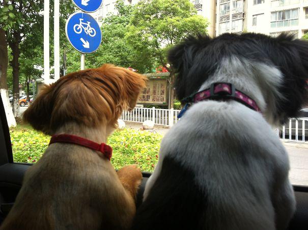 Mogwai And Angie Like To Go Cruising Around Town.