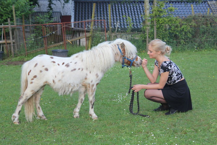 Brittish Spotted And American Miniature Mix And Me! Her Name Is Doll. And Yes Her Mane Is Curly