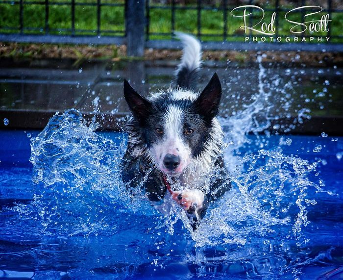 I Photograph My Young Border Collie Playing In The Water