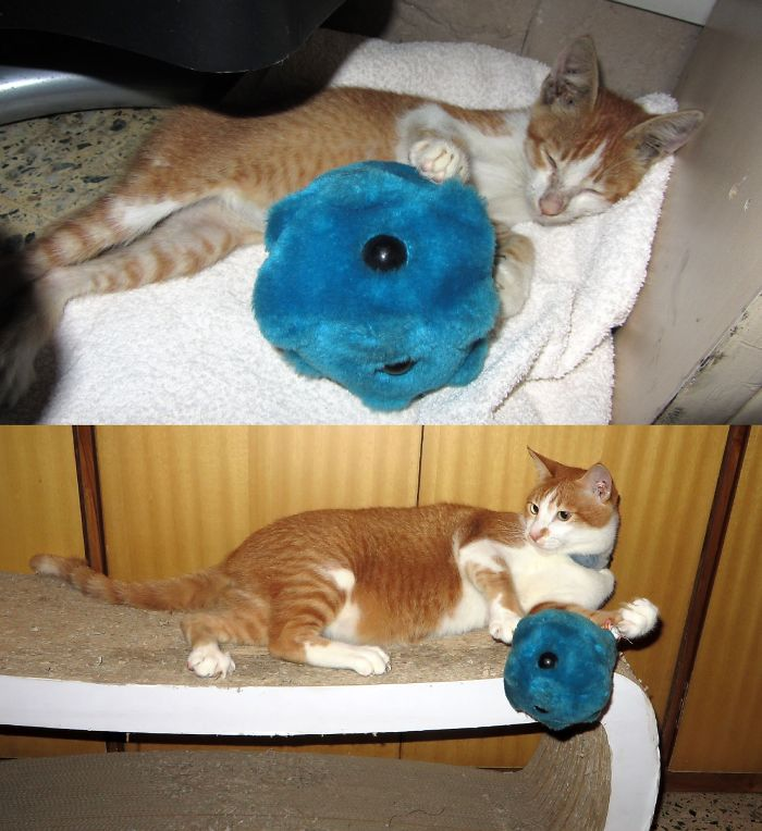 3 Yrs On, Marmalade Still Loves To Wrestle With The Cold - That Is This Cold Virus Plushie.