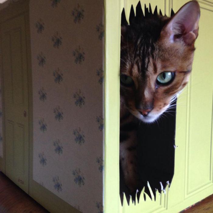 Here's Kitty Cat Play Box