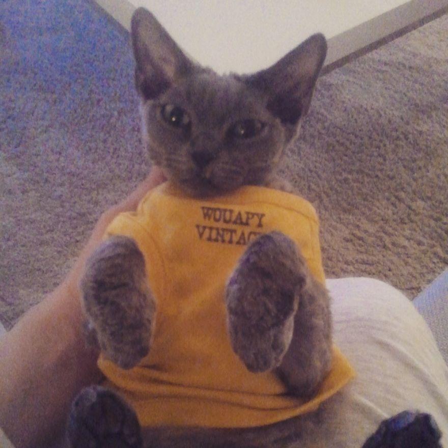 Meet Lucifer The Goblin Cat!