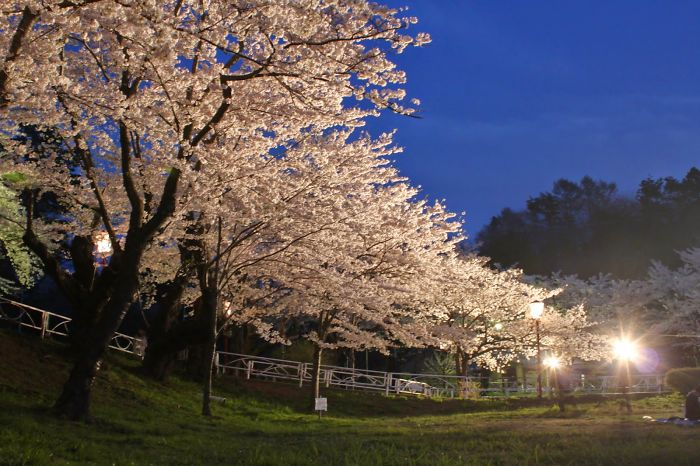 Images Of Spring From Morioka And Ushiku, Japan