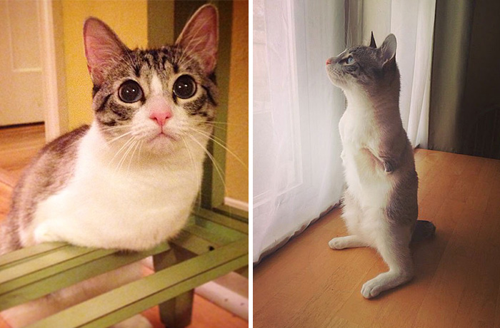 Roux The Adopted Two-Legged Bunny-Cat Is Instagram's Latest Sensation