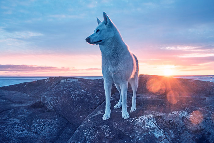 My Adopted Dog's Adventures: From Life In A Cage To Life On The Road