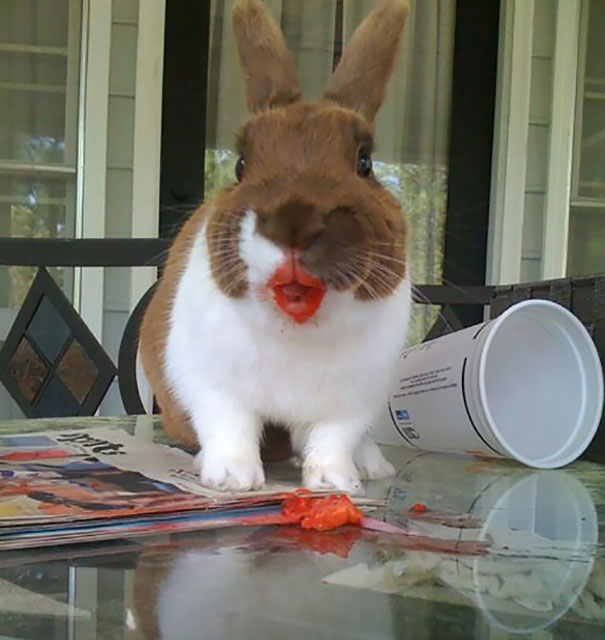 Rabbit Eating Strawberry