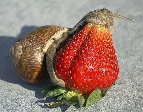 12 animals eating berries look like horror movie monsters