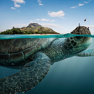 Majestic Sea Animals Bear The Four Biospheres Of Ecuador On Their Backs