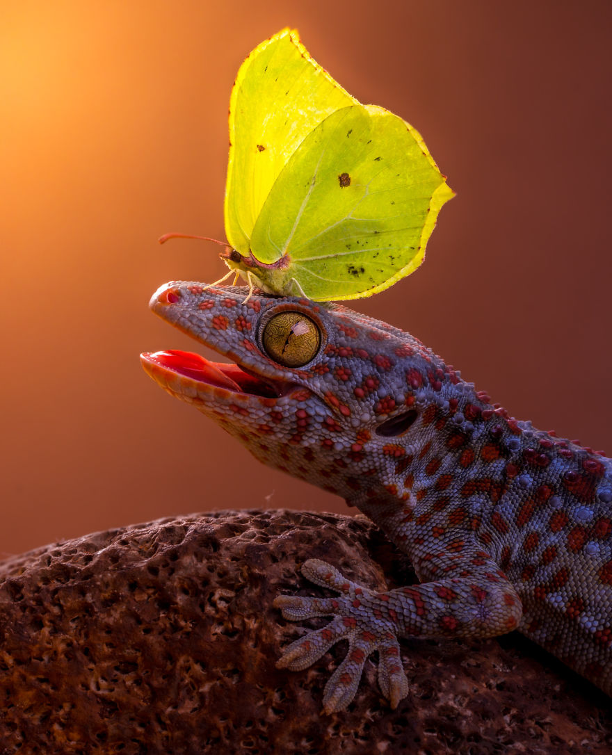 Gecko And Butterfly