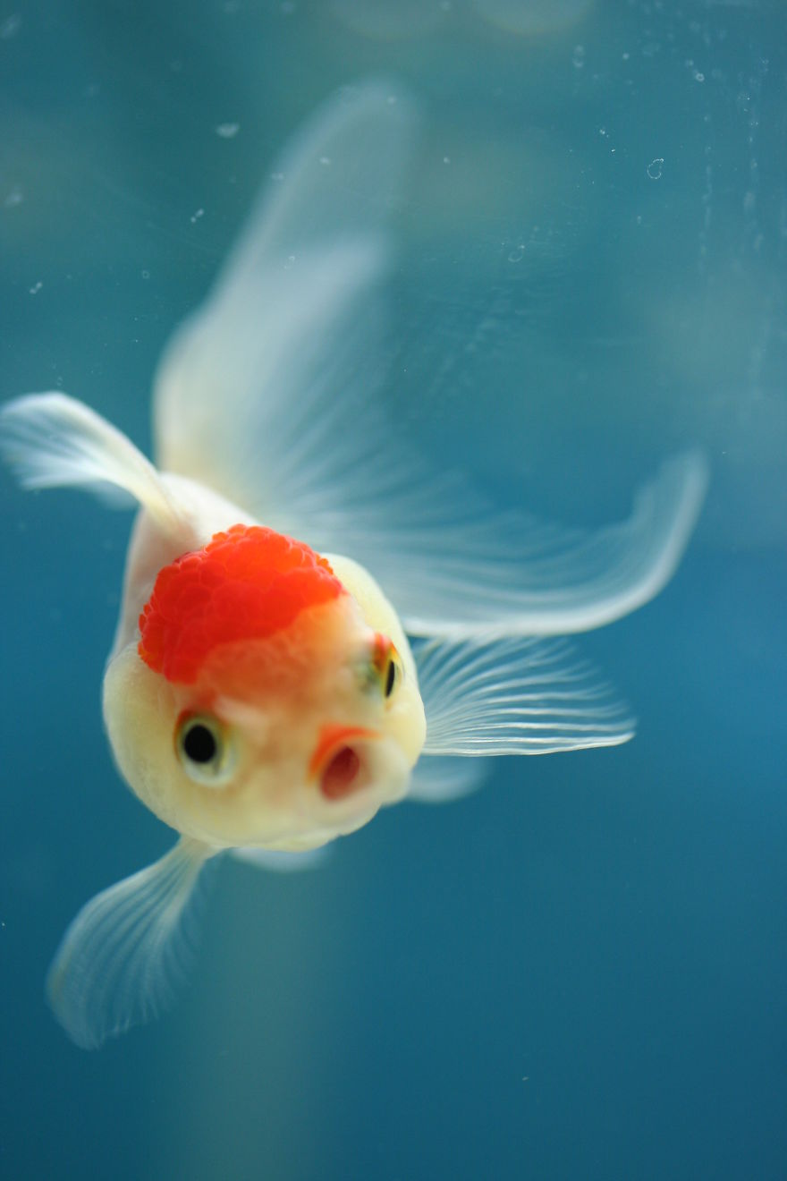 15 of the most surprised fish in the ocean crazy eyes guff for Show me pictures of fish
