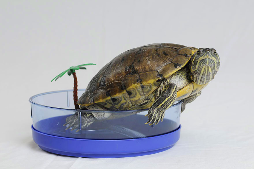 audrey-rescued-turtle-little-resq (1)