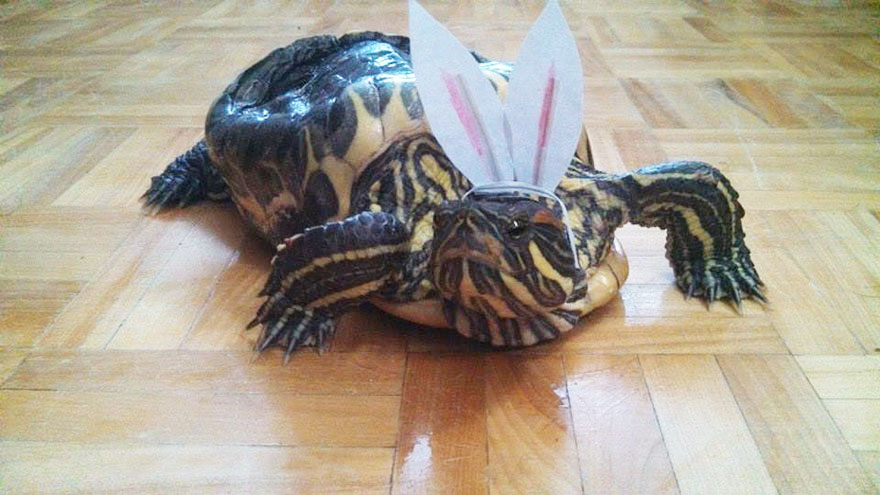 audrey-rescued-turtle-little-resq (13)