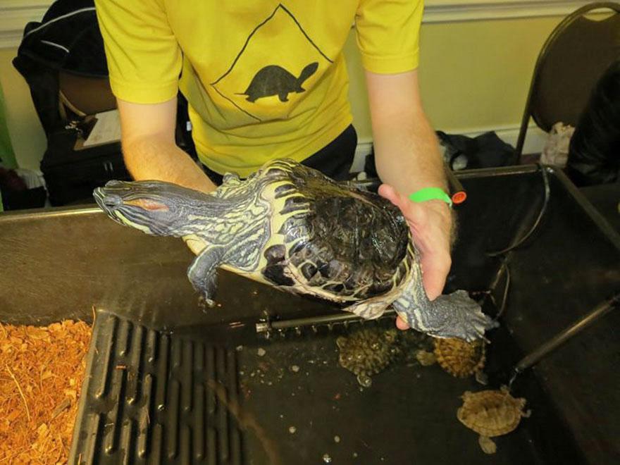 audrey-rescued-turtle-little-resq (7)