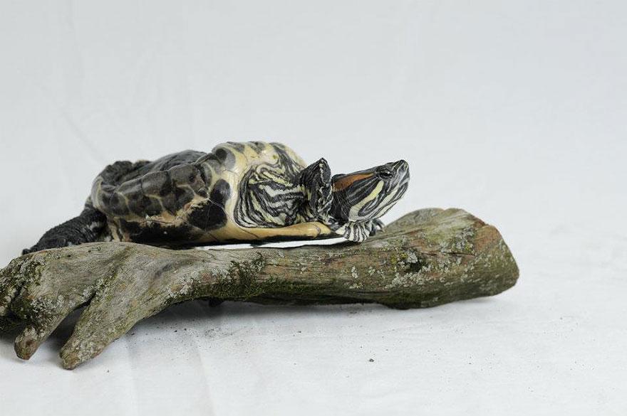 audrey-rescued-turtle-little-resq (8)