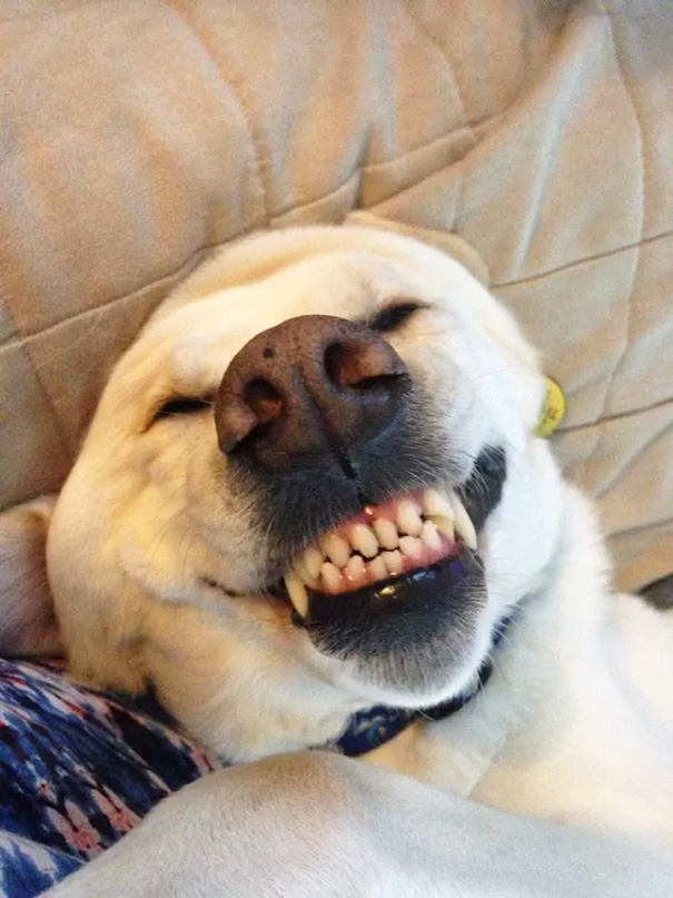My Dog Every Time He Gets A Belly Rub