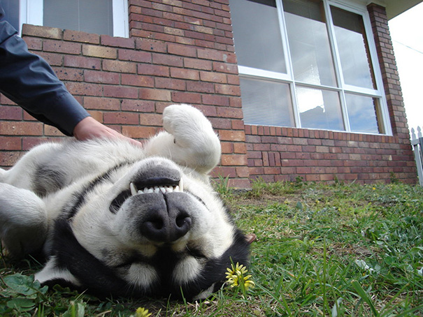 Toby Gets A Belly Rub