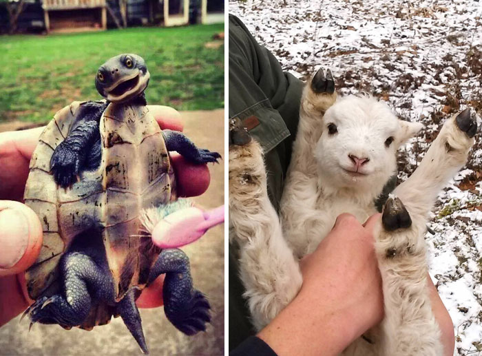 92 Animal Bellies That Need To Be Rubbed Right Now