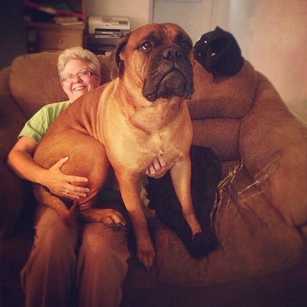 I'm Thankful For My Momma And Our Bull Mastiff Mick