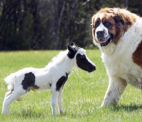 Dog As Big As A Horse