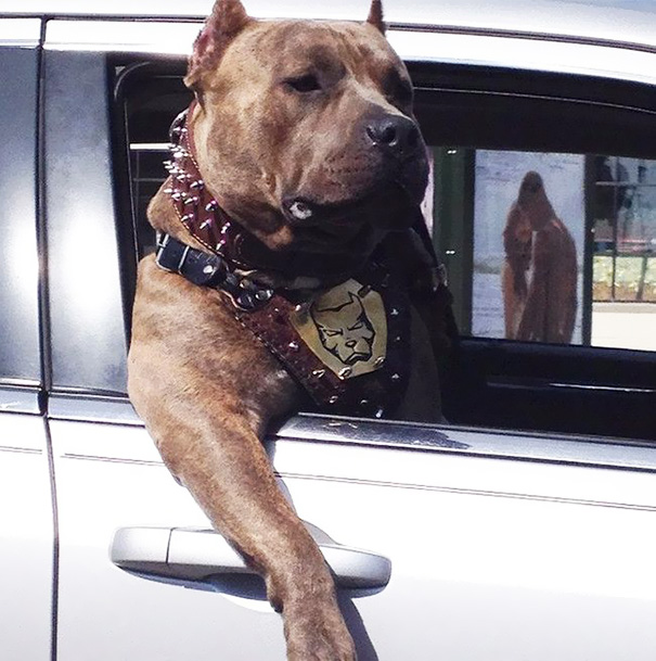 My Friend Saw This Ruff Rider Chillin' Out The Car Window