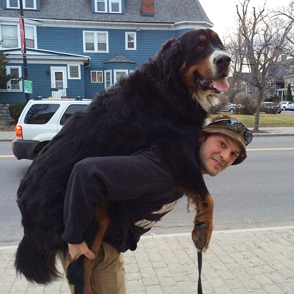 My Friend's Dog Likes Piggyback Rides, Even Though He's A Little Big