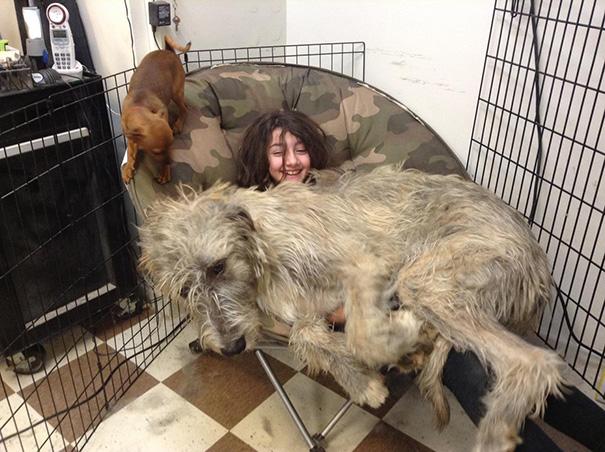 Irish Wolfhound Puppy Wants His Chair