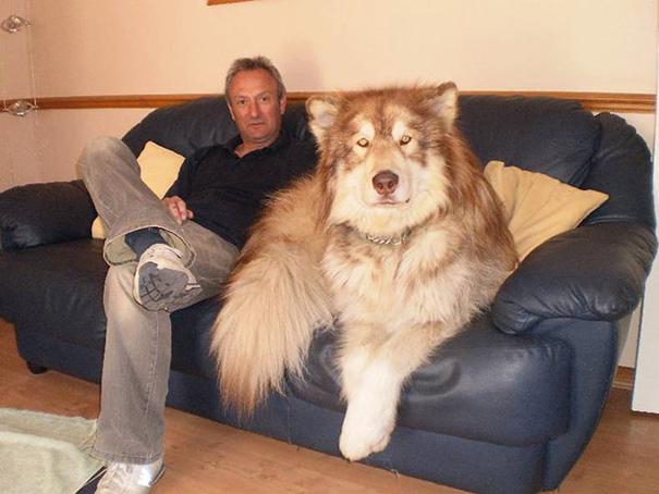 Look At This Big Dog
