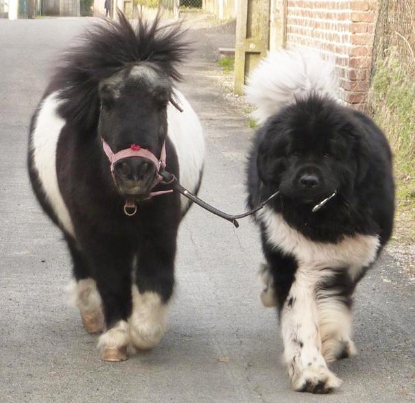 Big Dog And Small Pony