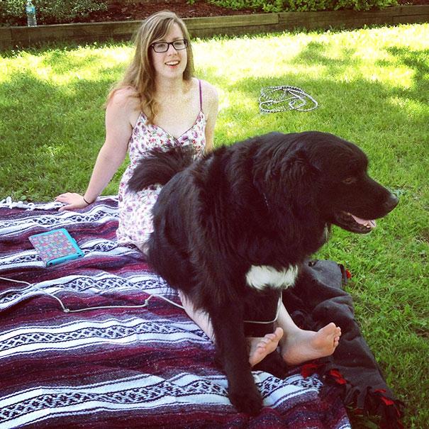 My 120lbs Lap Dog Rufus