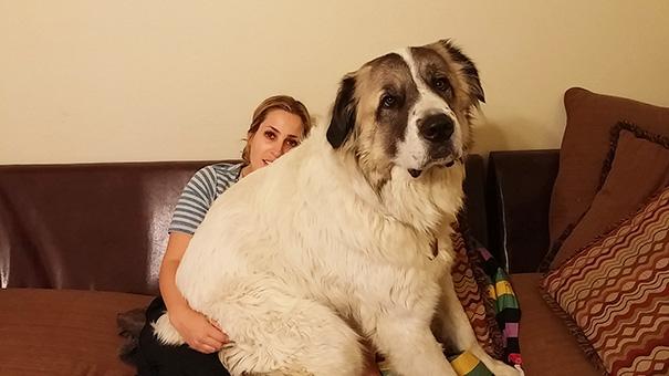 My Lap Dog