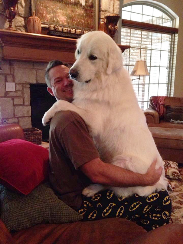 This Dog Still Thinks He's A Lap Dog