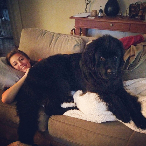 This Puppy Still Thinks He's A Lap Dog