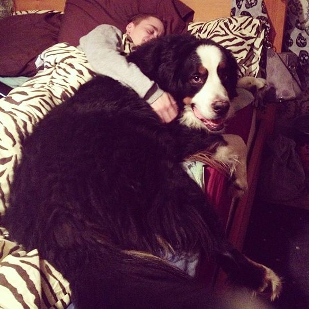 I Think My Dog Is Bigger Than My Boyfriend