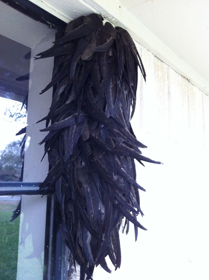 Birds Huddled Up Together On The House