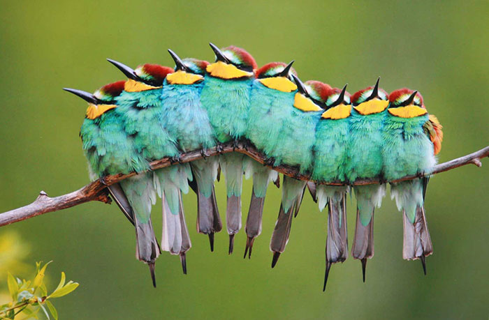 30 Pics Of Birds Cuddling Together For Warmth Will Melt Your Heart