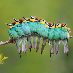 16+ Pics Of Birds Cuddling Together For Warmth Will Melt Your Heart