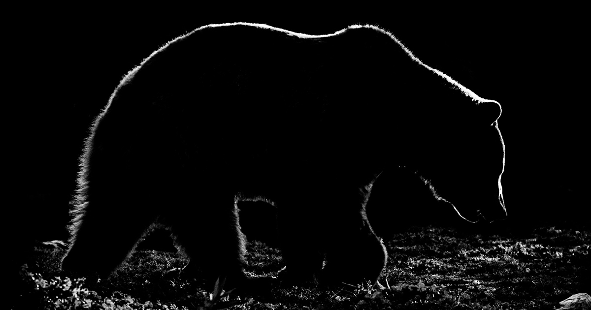 animal outlines my black and white photos of animal silhouettes bored panda - Animal Outlines