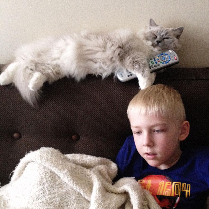 boy-cat-friendship-beth-mancuso1