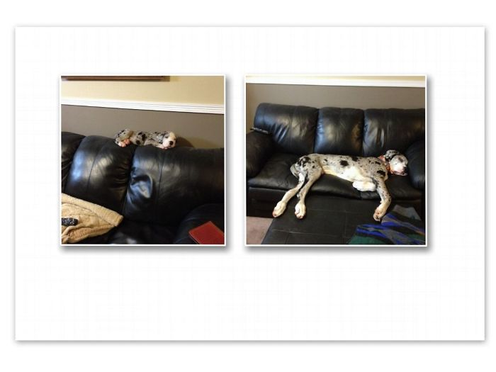 Tucker 2 Months And 12 Months