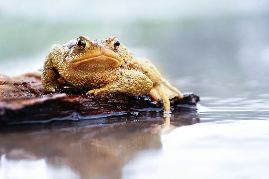 Toads Are Great Models