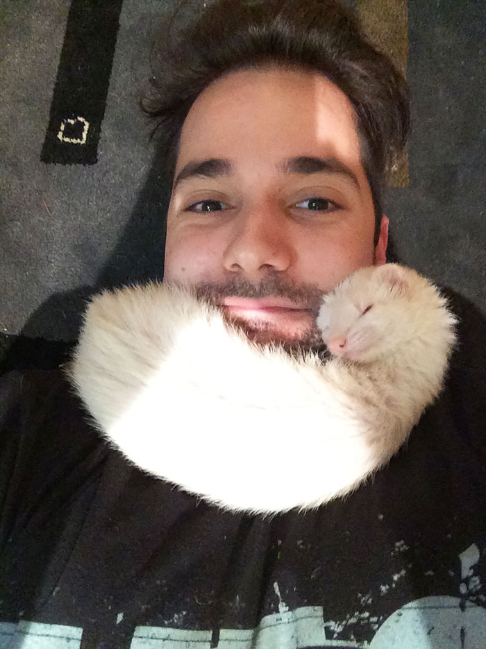 If I Lay On The Floor, My Ferret Climbs Up For A Nap