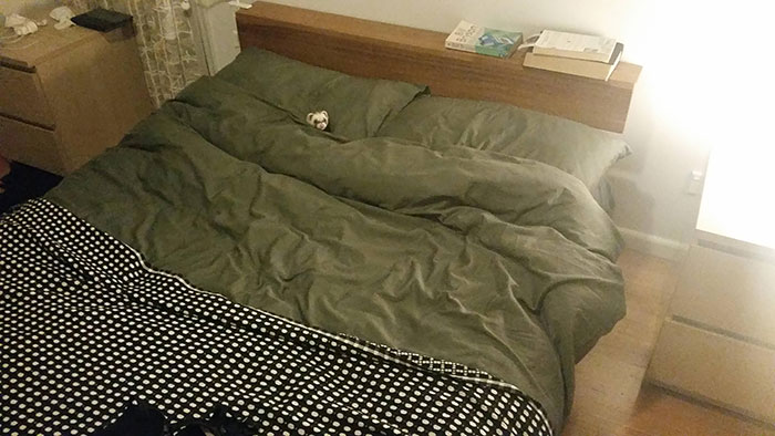 This Bed Is Mine!