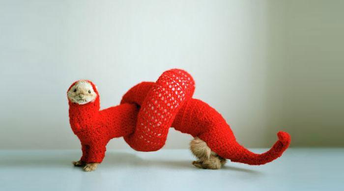Halloween Costume For Ferret