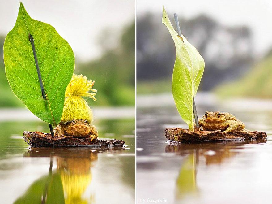 cute-toads-animal-photography-gabi-stickler-3
